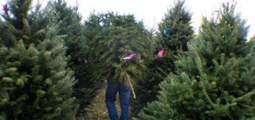 Weihnachtsbäume TOP Preise